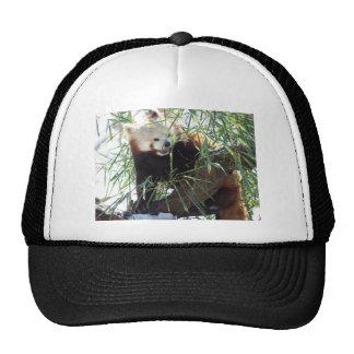 Red Panda Open Mouth Trucker Hat