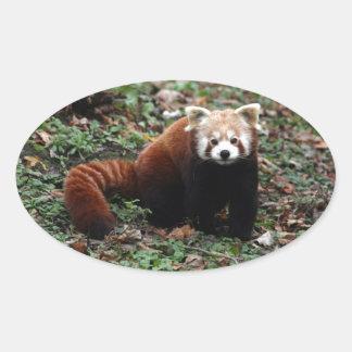 Red Panda Oval Sticker