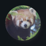 "Red Panda Paper Plate<br><div class=""desc"">Reproduced from an original digital photograph of a cute red panda.</div>"