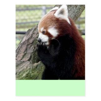 Red panda post cards