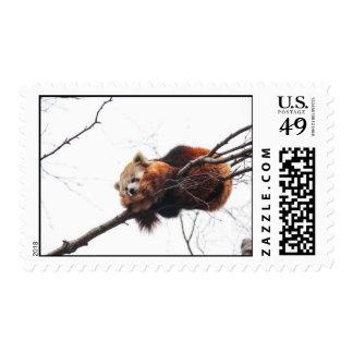 Red Panda Postage Stamp
