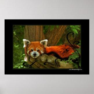 Red Panda Poster Print