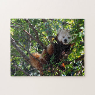 Red Panda Puzzle - Lounging