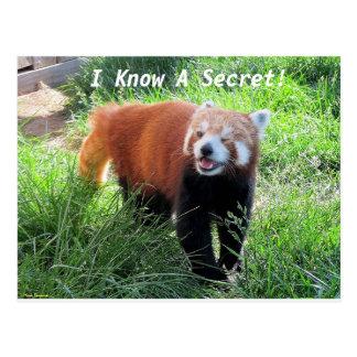 Red Panda Secret Postcard