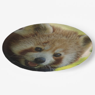 red panda 9 inch paper plate