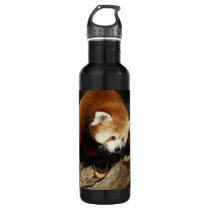 Red Panda Stainless Steel Water Bottle