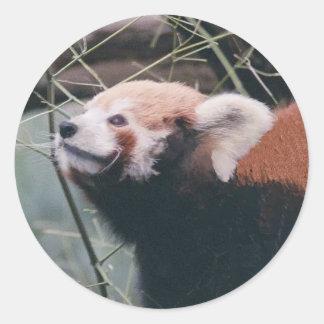 Red Panda Stickers
