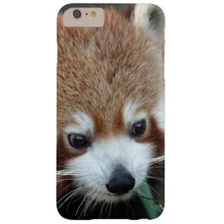 Red Panda, Taronga Zoo, Sydney, Australia Barely There iPhone 6 Plus Case