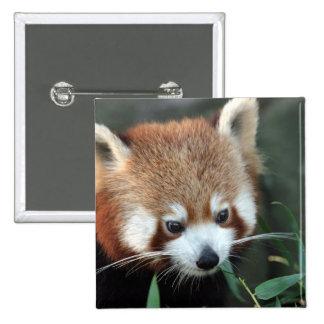 Red Panda, Taronga Zoo, Sydney, Australia Button