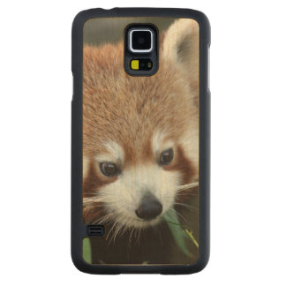Red Panda, Taronga Zoo, Sydney, Australia Carved® Maple Galaxy S5 Slim Case