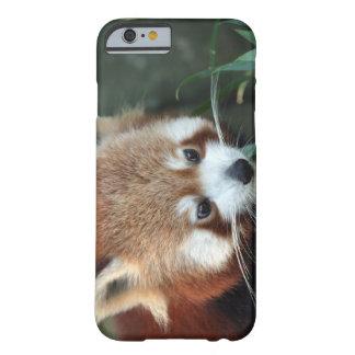 Red Panda, Taronga Zoo, Sydney, Australia Barely There iPhone 6 Case