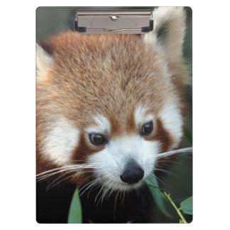Red Panda, Taronga Zoo, Sydney, Australia Clipboard