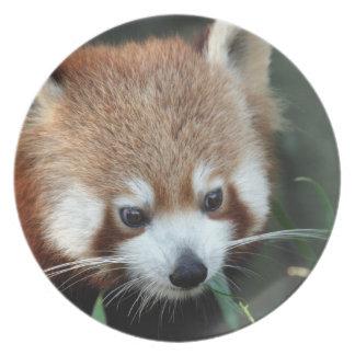 Red Panda, Taronga Zoo, Sydney, Australia Dinner Plate