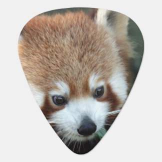 Red Panda, Taronga Zoo, Sydney, Australia Guitar Pick