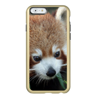 Red Panda, Taronga Zoo, Sydney, Australia Incipio Feather® Shine iPhone 6 Case