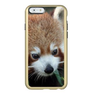 Red Panda, Taronga Zoo, Sydney, Australia Incipio Feather Shine iPhone 6 Case