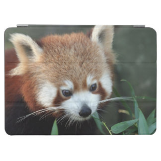 Red Panda, Taronga Zoo, Sydney, Australia iPad Air Cover