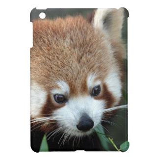 Red Panda, Taronga Zoo, Sydney, Australia iPad Mini Cover
