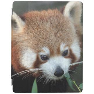 Red Panda, Taronga Zoo, Sydney, Australia iPad Smart Cover