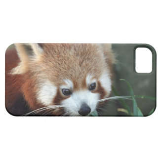 Red Panda, Taronga Zoo, Sydney, Australia iPhone SE/5/5s Case