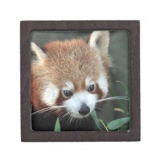 Red Panda, Taronga Zoo, Sydney, Australia Jewelry Box