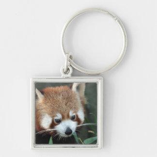 Red Panda, Taronga Zoo, Sydney, Australia Keychain