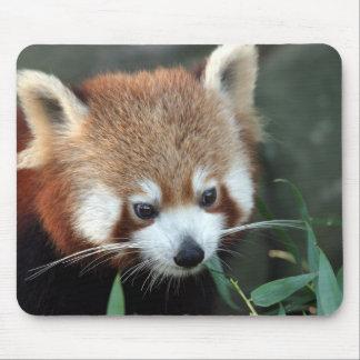 Red Panda, Taronga Zoo, Sydney, Australia Mouse Pad