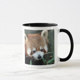 Red Panda, Taronga Zoo, Sydney, Australia Mug