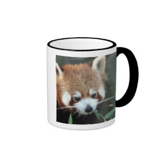 Red Panda, Taronga Zoo, Sydney, Australia Ringer Coffee Mug