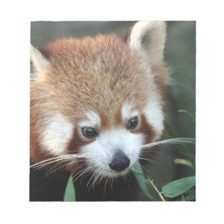 Red Panda, Taronga Zoo, Sydney, Australia Notepad