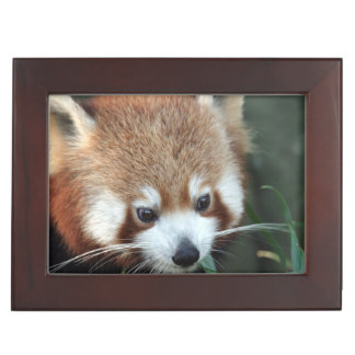 Red Panda, Taronga Zoo, Sydney, Australia Memory Box