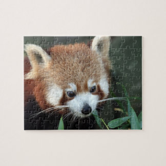 Red Panda, Taronga Zoo, Sydney, Australia Puzzle