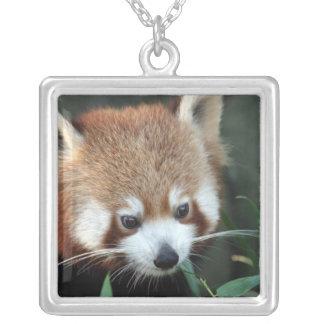 Red Panda, Taronga Zoo, Sydney, Australia Silver Plated Necklace
