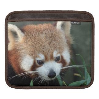 Red Panda, Taronga Zoo, Sydney, Australia Sleeve For iPads