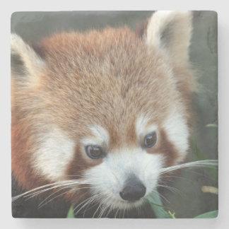 Red Panda, Taronga Zoo, Sydney, Australia Stone Coaster