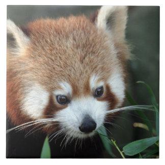 Red Panda, Taronga Zoo, Sydney, Australia Tile