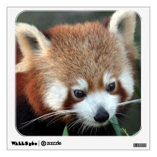 Red Panda, Taronga Zoo, Sydney, Australia Wall Sticker