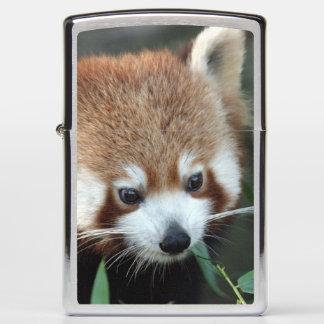 Red Panda, Taronga Zoo, Sydney, Australia Zippo Lighter