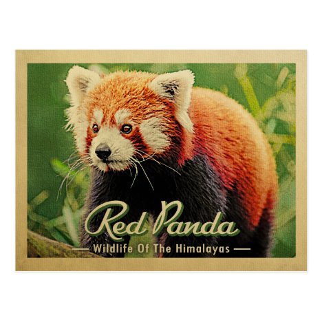 Red Panda - Wildlife Of The Himalayas Postcard