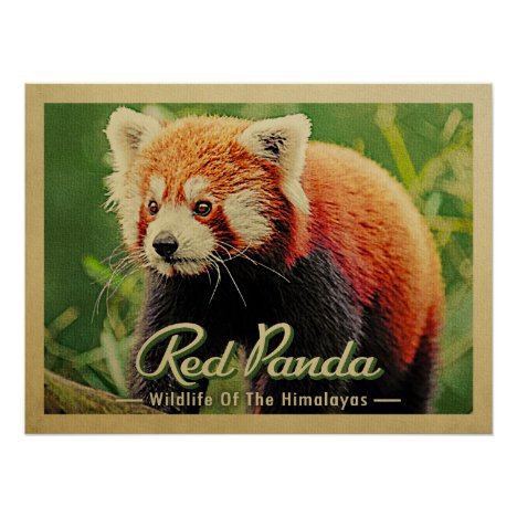 Red Panda - Wildlife Of The Himalayas Poster