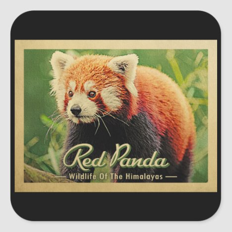 Red Panda - Wildlife Of The Himalayas Square Sticker