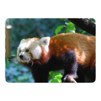 Red Panda With a Cute Face 5x7 Paper Invitation Card