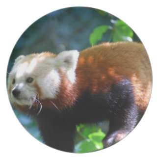 Red Panda With a Cute Face Party Plates