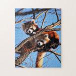 red pandas puzzle
