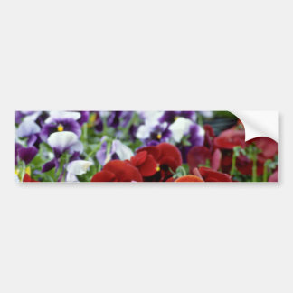 Red Pansies With Black Centers flowers Bumper Sticker
