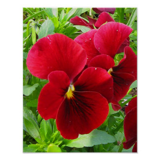 "Red Pansy 11""x14""Poster"