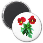 Red Pansy Duo Fridge Magnets