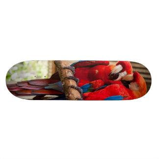 Red parrot 8 1/2 skateboard