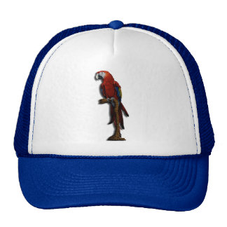 Red Parrot alone hat