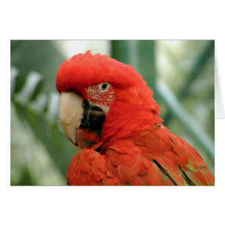Red Parrot Cards